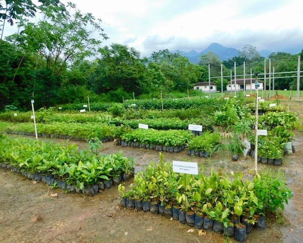A native tree nursery for large-scale restoration of Atlantic Forest at Reserva Natural Guapiaçu, Rio de Janeiro State, Brazil. Robin Chazdon, CC BY-ND