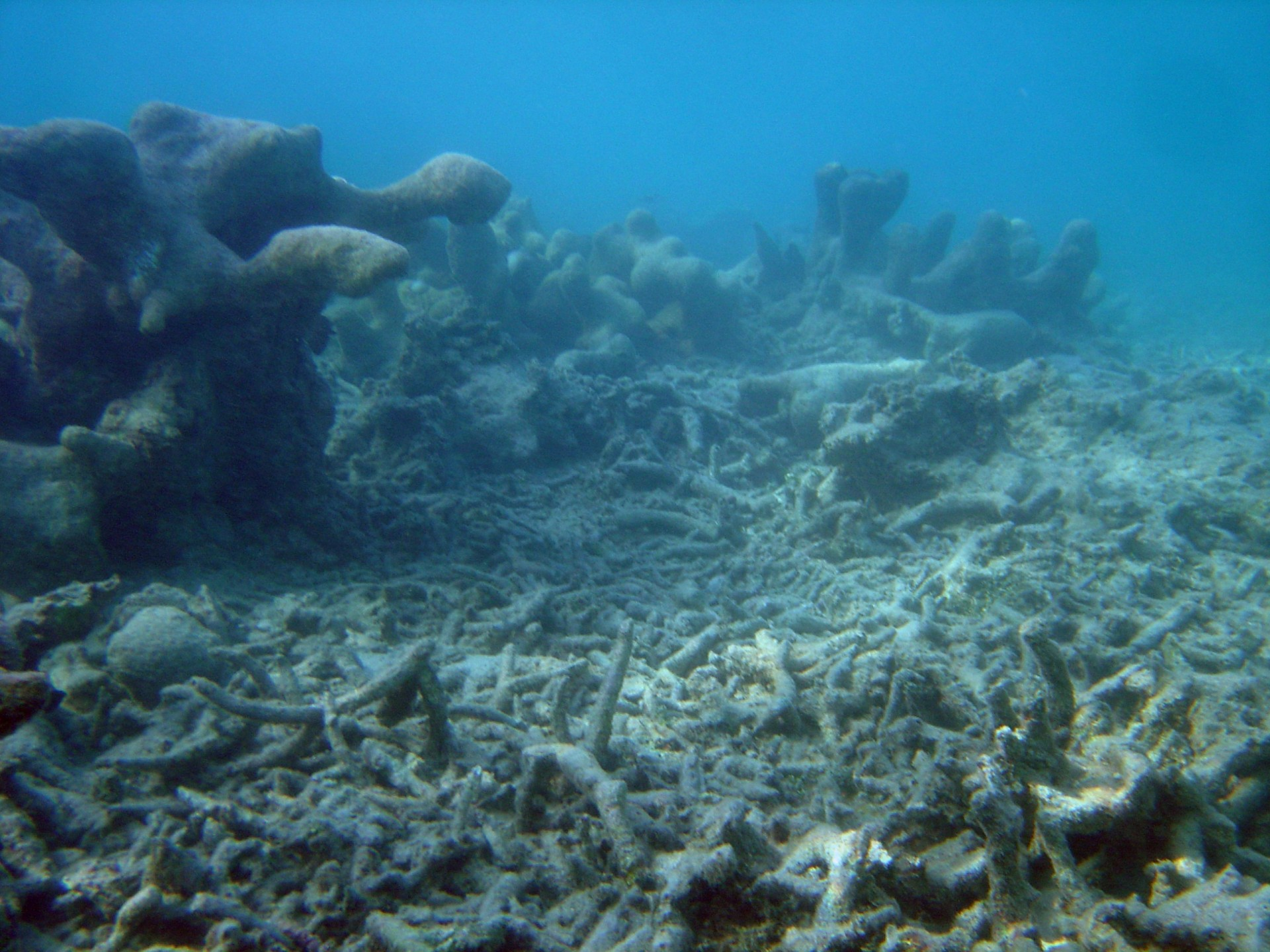 "A coral ""cemetery"" by David Burdick"