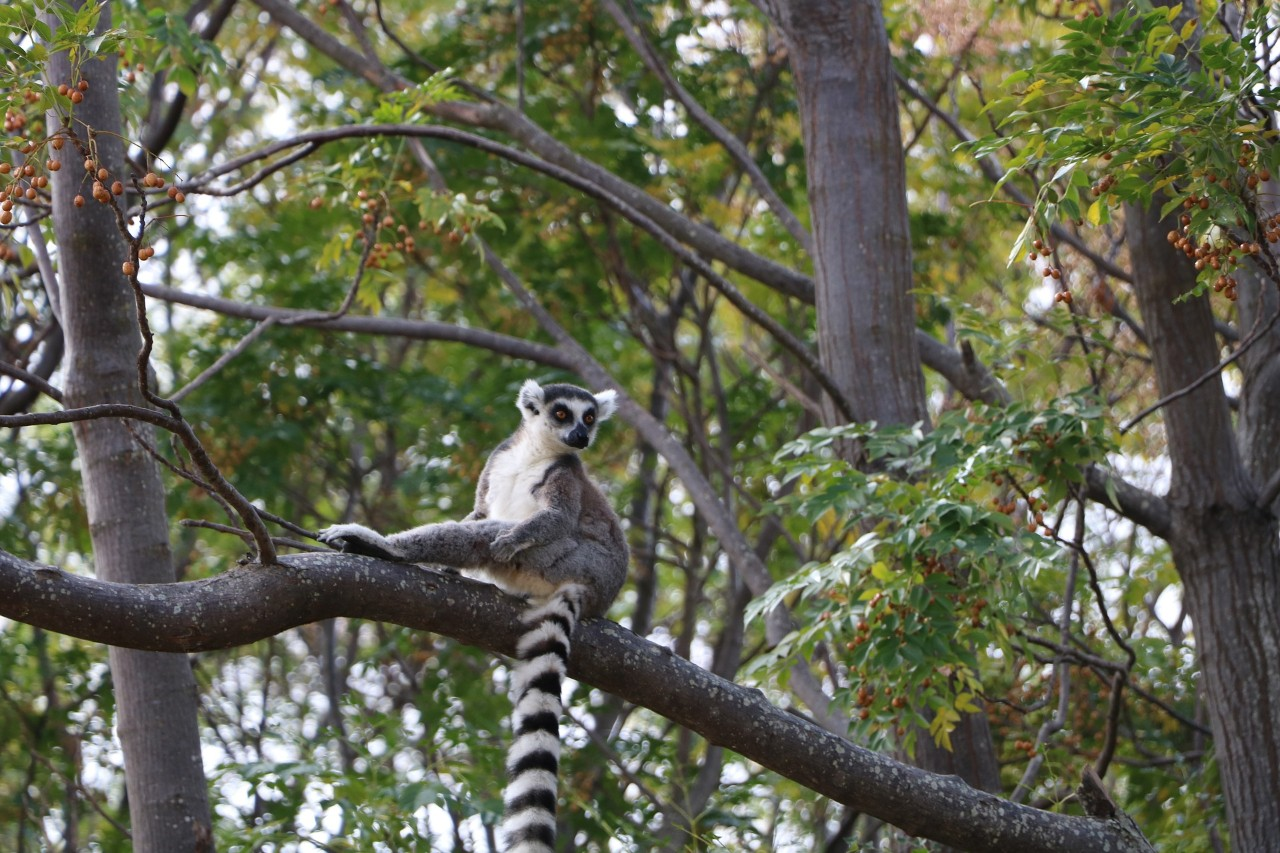 Madagascar's forests are home to lemurs – and lots of resources that humans could easily exploit. Image by xsama from Pixabay.